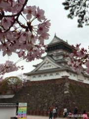 北九州市「小倉城の花見」ルール発表 場所取り「マナー守って」