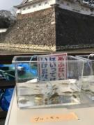 小倉城「お堀の水ぜんぶ抜く」石垣調査 「本来価値の見極め」目的に