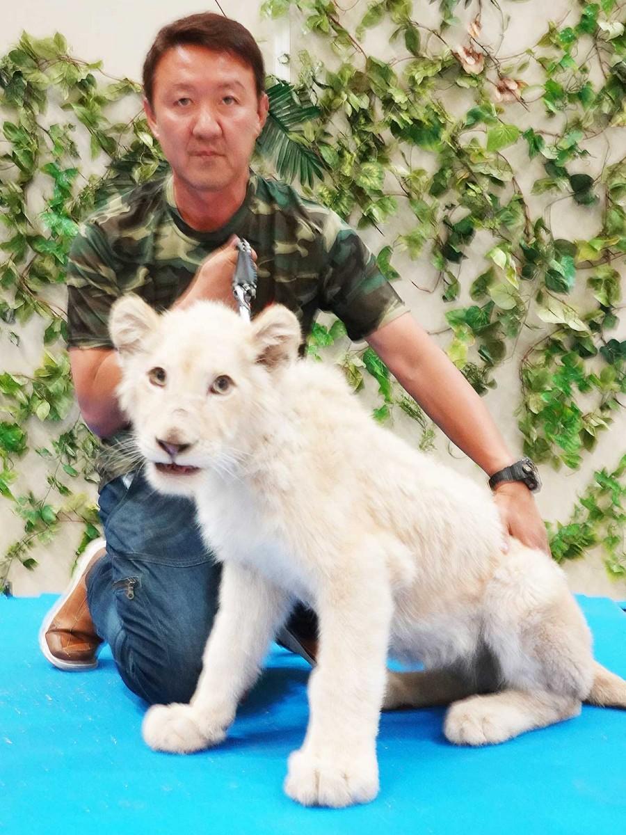 園長の星野和生さんと生後8カ月のホワイトライオン