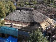 江東「旧大石家住宅」でかやぶき屋根ふき替え