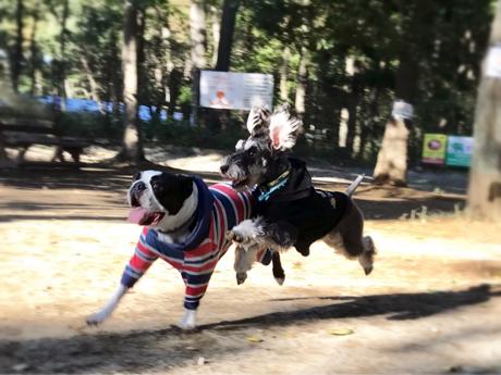 大型犬も小型犬も一緒に楽しめるドッグラン