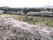 熊谷の航空自衛隊熊谷基地でさくら祭り F-15戦闘機の航過飛行も