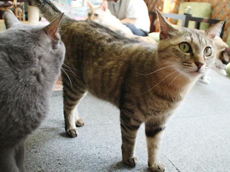 保護猫カフェ「Good Luck」で暮らす猫