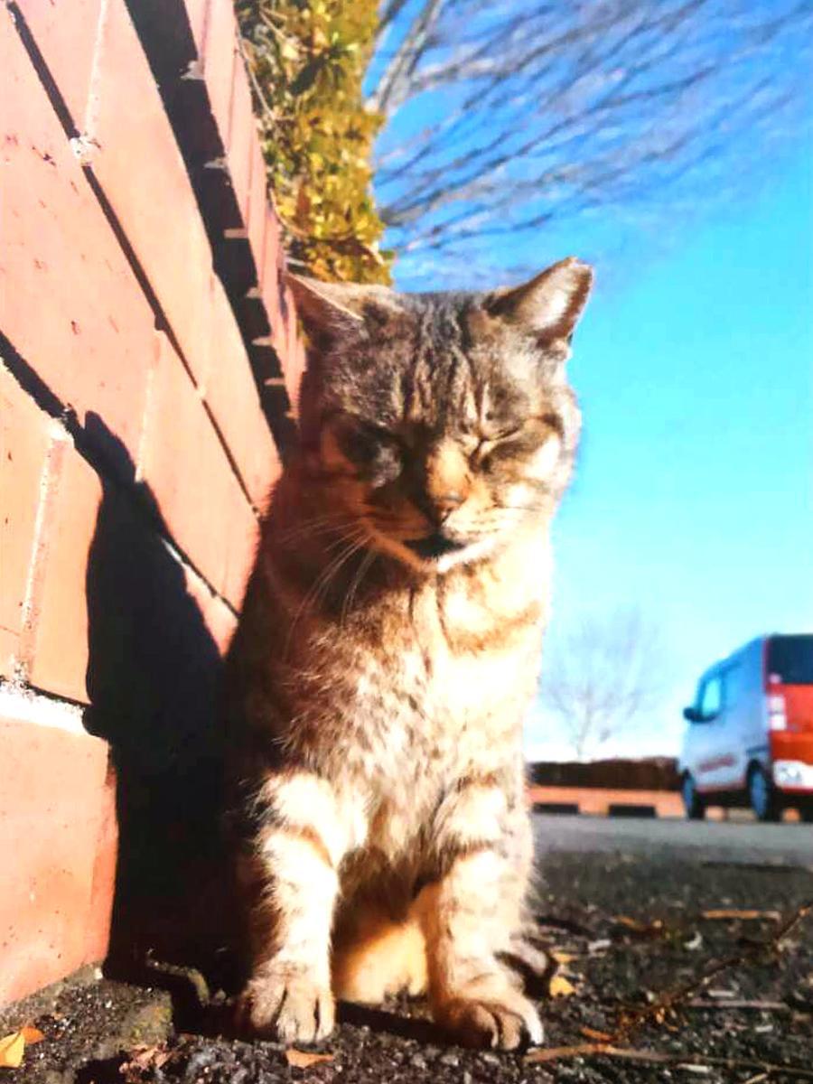 日々逞しく生きる猫の姿を感じてほしいと呼び掛ける