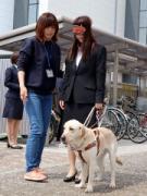 コンタクトのシード入社式で恒例の「盲導犬歩行体験」 アイメイトの協力で
