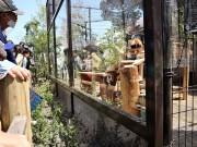 東松山・こども動物自然公園に屋外運動場「レッサーパンダの幸せな庭」 アニマル基金で