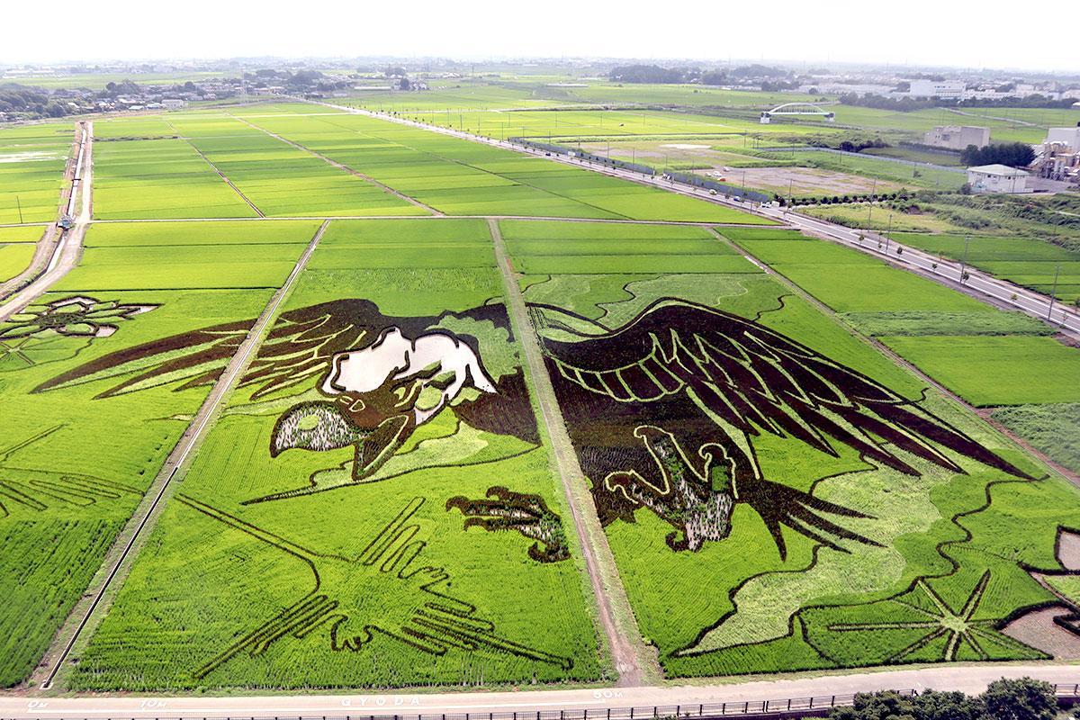 古代蓮会館の展望室から見える田んぼアート