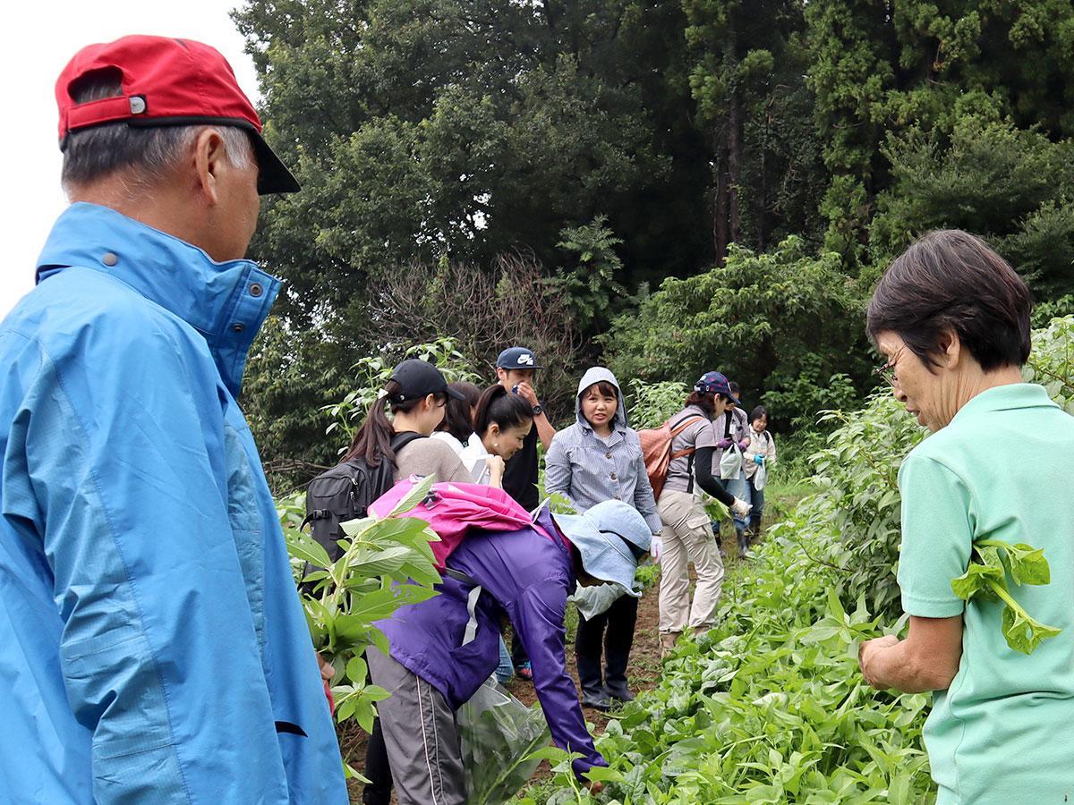 鈴木さんの説明を聞きながら収穫する参加者ら