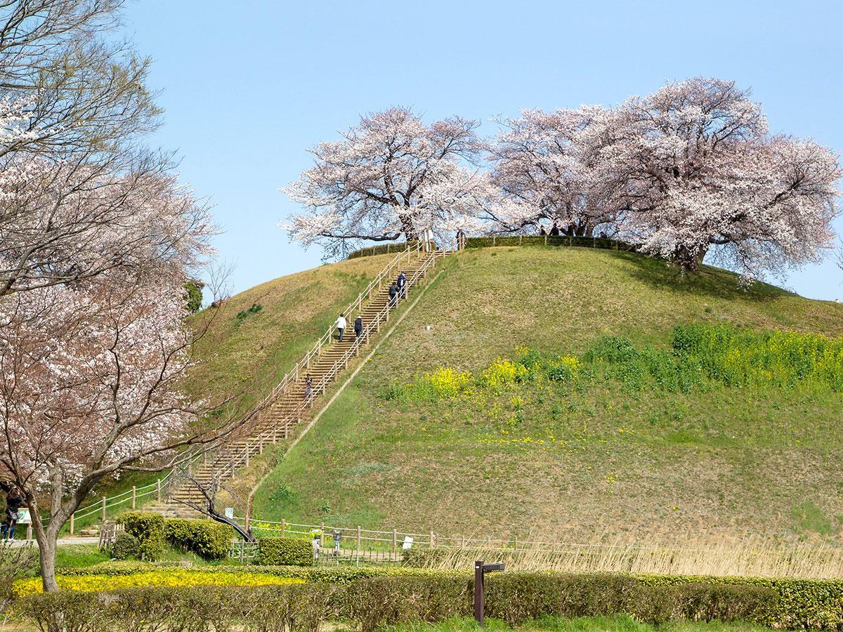 国の特別史跡に認定される「埼玉古墳群」の一つ、丸墓山古墳