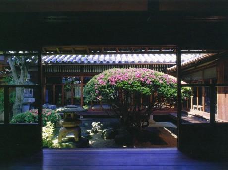市の重要文化財「楠戸家」の中庭に咲く樹齢250年の大サツキ