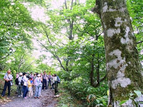 里山遊歩道を散策する参加者(昨年)