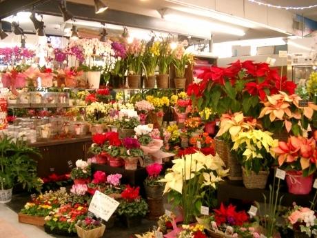 ランやシクラメンなど色とりどりの花が並ぶ