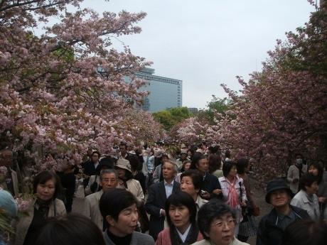 大勢の来場者を桜のトンネルが迎える