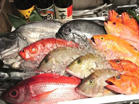 仕入れた新鮮な魚