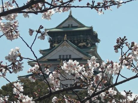 年間入場者数が過去最多となった大阪城天守閣