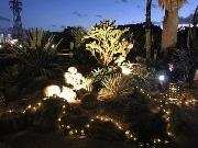 咲くやこの花館で「ムーンナイトガーデン」 幻想的な植物と音楽と味がコラボ