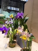 大阪・咲くやこの花館で「秋のラン展」 「野生の蘭」「育て方講習会」も