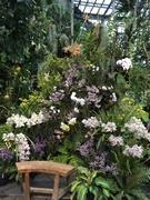 大阪・咲くやこの花館で「春のラン展」 シュンランのコレクションなど280種