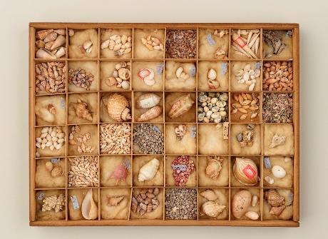 「貝類標本」大阪市立自然史博物館蔵