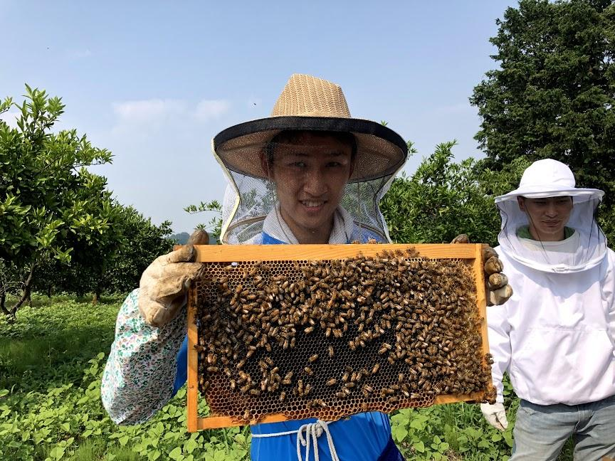 蜂蜜の生産を手伝う農大ボクシング部員