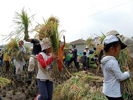 稲刈り後、東京農業大学学生の合いの手で稲を持って踊る参加者