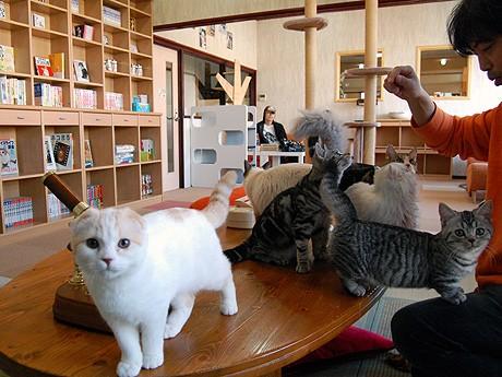 猫カフェスペース。子猫はとても人なつっこい。