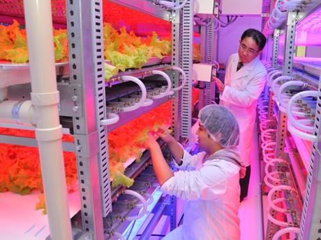 玉川大学は2010年に「Future Sci Tech Lab」(写真)を建設。レタスやハーブなどのLED栽培技術の確立、植物栽培光源用の低コストな実用的高輝度LEDパネルの開発、LEDパネル光源・水耕栽培装置・栽培制御システムの組合せの最適化などの研究成果をあげた。