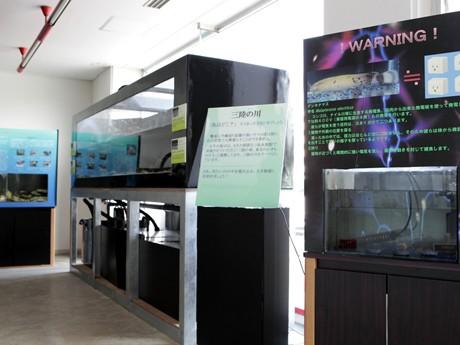 北里アクアリウムラボの展示風景