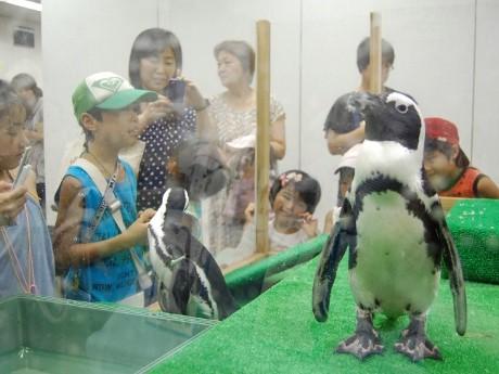 一時閉館前のイベントに登場したペンギン。館内散歩では大勢の来館者で賑わった。