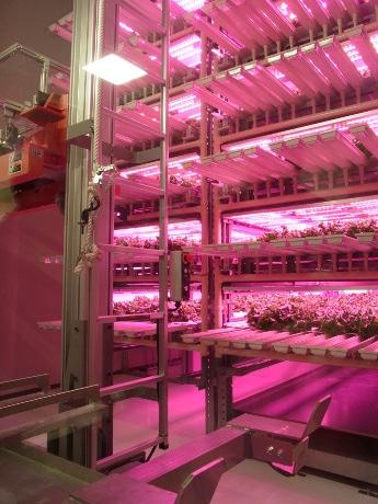LED農園サイテックファームの内部