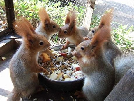 食卓を囲むリス