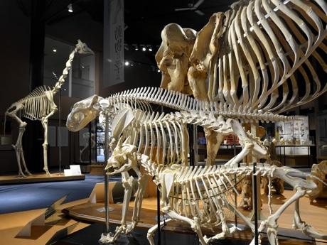 麻布大学いのちの博物館