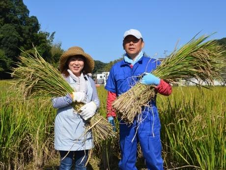 もち黒米を収穫する小川さん夫婦