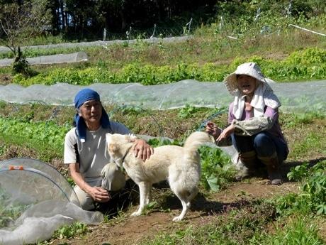 青木瑠璃さん、高橋祐司さん、愛犬「コハク」。農地の周りを犬と散歩することで、タヌキやハクビシンが寄り付きにくくなっているという