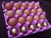 金の卵とうんち型メレンゲ 町田の養鶏場が「金運セット」商品化