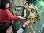 相模原の動物広場で「リスザル」とふれあい エサやり体験も