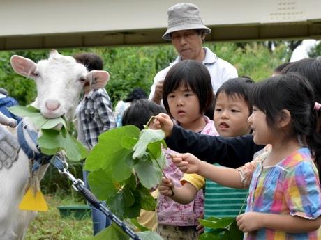 ヤギと触れ合う園児ら