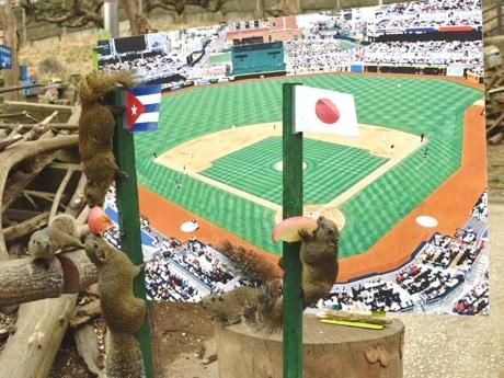 日本vsキューバのリス占いの様子