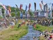 「鯉のぼりの川渡し」 町田・鶴見川に200匹のコイ
