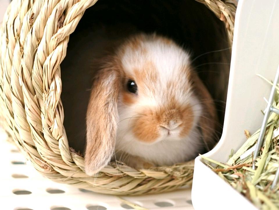 「うさぎカメラ」で撮影したウサギ