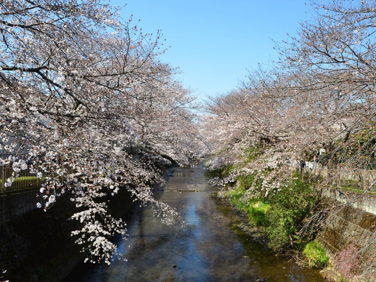 弁天橋からの眺め(2020年3月25日撮影)