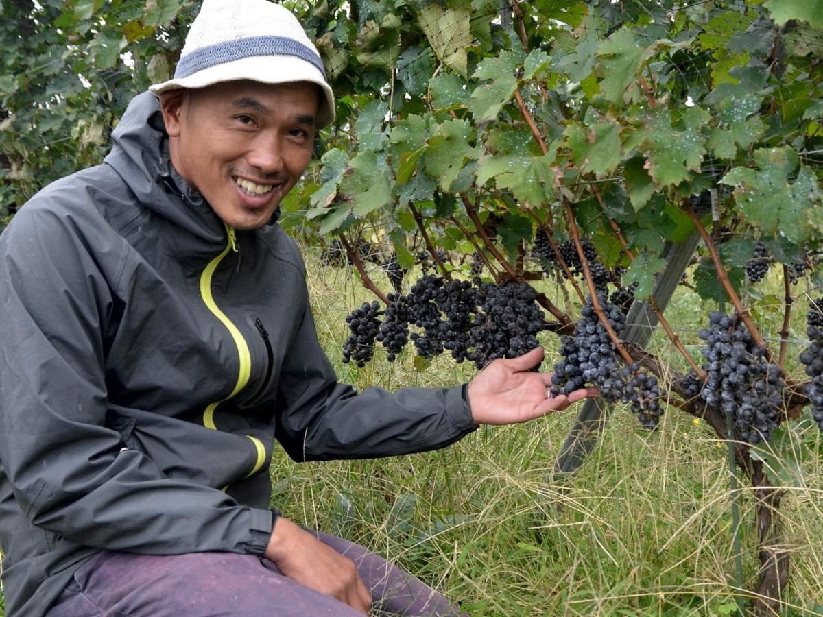 ブドウを栽培する農業生産法人「八咲生農園」の町田誠さん