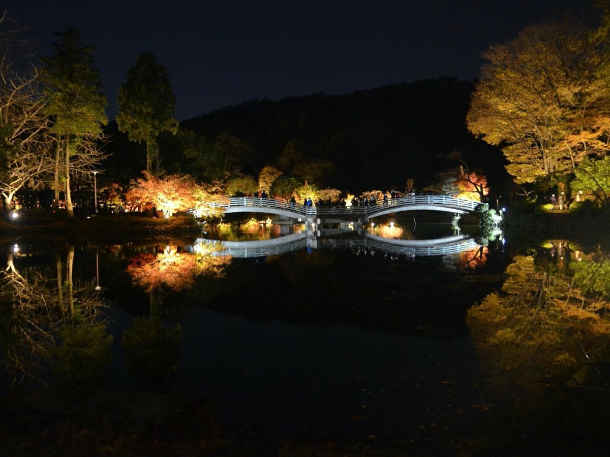 薬師池公園のライトアップ