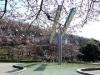 町田各所で「桜祭り」-市民・行政協働のガイドブックやウオーキング大会も