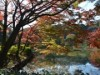 薬師池公園の紅葉が見頃に 音楽ライブや公園撮影会も