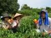 相模湖で有機野菜「もぎ取り」進呈 人手不足による未収穫防止へ