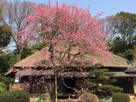 国の登録有形文化財に登録された旧齋藤邸の主屋