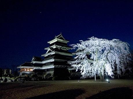 「駒つなぎ桜」と松本城。