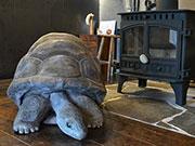 松本各地の店にカメ・マナティなど「乾漆」動物 木工作家のリアル作品話題に