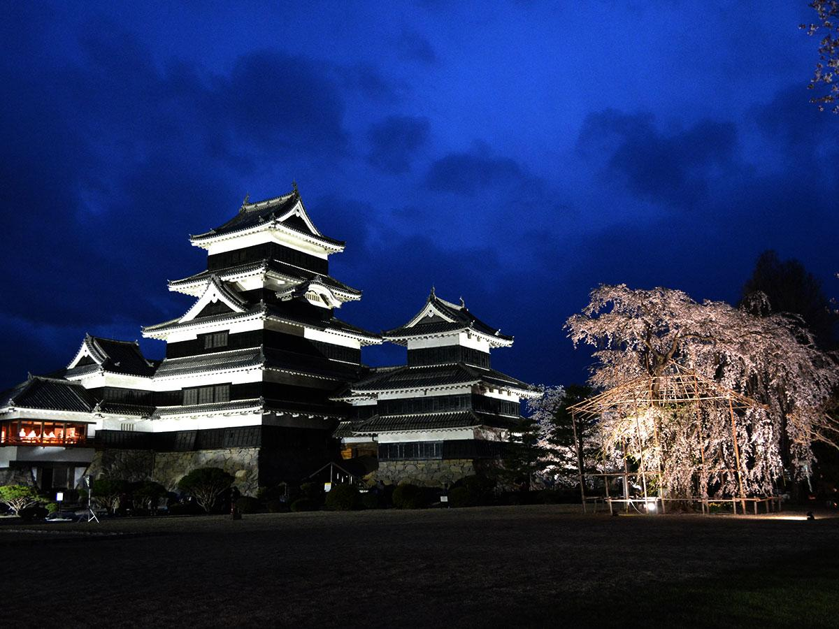 「夜桜会」の様子